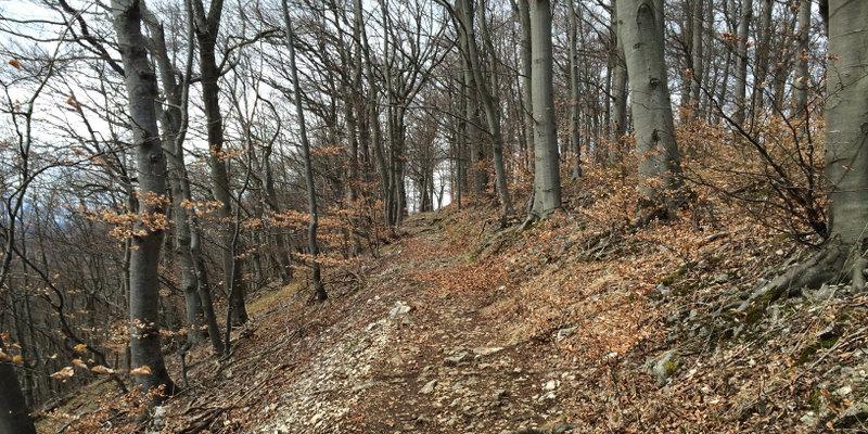 Buchenwald an der Albkante