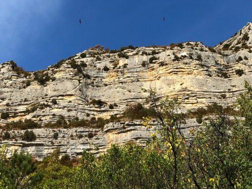Geier über Felswand
